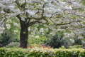 Blossoming tree and blooming flowers in dutch garden Royalty Free Stock Photo