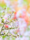 Blossoming tree branch of a blossom on bokeh background Stock Images