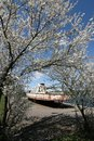 Blossoming tree and old motorboat Stock Photography