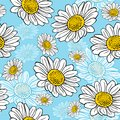 Blossoming white daisies on a blue background