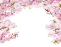 Blossoming white  tree Flowers Royalty Free Stock Photo