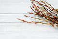 Blossoming willow twigs on the boards Royalty Free Stock Photo