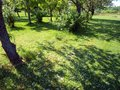 Blossoms on grass lot of apple tree blossom petals Stock Images