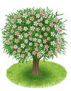 Blossoms tree in green field spring with illustration Stock Photography