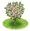 Blossoms tree in green field spring with illustration Stock Image