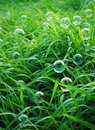 Blow bubbles in green grass background Royalty Free Stock Images