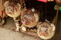 Blowfish or puffer fish in Souvenir shop. Porcupinefish. Royalty Free Stock Photo