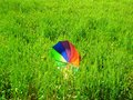 Blown umbrella in wheat field on sunny windy day Royalty Free Stock Photo