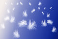 Blue abstract page of floating feathers over background Stock Image