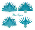 Blue agave or tequila agave plant. Vector set Royalty Free Stock Photo