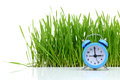 Blue alarm clock with grass Royalty Free Stock Photo