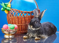 On a blue background rabbit lies near vase with easter eggs and a basket with a balloon Royalty Free Stock Photo