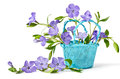 Blue basket with periwinkle beautiful flowers on a white background Stock Images