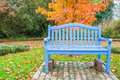 Blue bench orange fall color tree wooden park in front of an autumn horizontal copy space Royalty Free Stock Photography