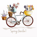 Blue bicycle and potters ful of crocus flowers. Spring garden Royalty Free Stock Photo