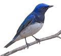 Blue bird clipping picture of Stock Images