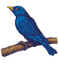 Blue bird retro illustration of on the branch Stock Photos