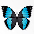 Blue and black butterfly Stock Photos