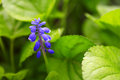 Blue bluebell bright warm summer photo of Royalty Free Stock Images