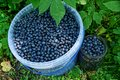 Blue blueberries in a plastic bucket and a glass jar Royalty Free Stock Photo