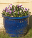 Blue bowl of pansies set against a stone wall. Royalty Free Stock Image