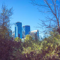 Blue Buildings Framed by Trees Royalty Free Stock Photo