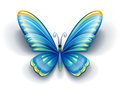 Blue butterfly with color wings insect eps vector illustration on white background Royalty Free Stock Photo