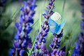 Blue butterfly on flower sitting meadow violet retro vintage hipster image Stock Photos