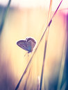 Blue butterfly on the grass Royalty Free Stock Photo