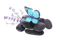 Blue butterfly on stones and lavender flower Royalty Free Stock Photo