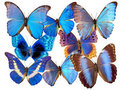 Blue butterflys Royalty Free Stock Photo