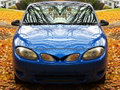 Blue car on maple leaves Royalty Free Stock Photo