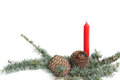 Blue cedar atlas with red candle cedrus atlantica for holiday decoration Royalty Free Stock Image