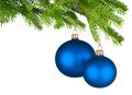 Blue christmas baubles hanging from fresh green twigs bright studio shot of two isolated fir Stock Image