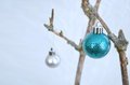 Blue christmas ornaments hanging on dead dried up branches Royalty Free Stock Images