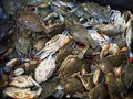 Blue claw crabs live from a local fish market Stock Photography