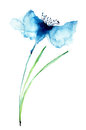 Blue colored cornflowers watercolor illustration Stock Image
