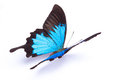 Blue and colorful butterfly on white background Royalty Free Stock Photo