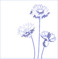 Blue cornflower centaurea cyanus vector illustration Royalty Free Stock Image