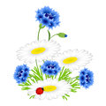 Blue cornflowers and chamomiles with ladybug on a white background.