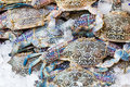 Blue crab fresh raw or flower in fresh market for sale Royalty Free Stock Photography