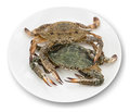 Blue crab white background Royalty Free Stock Photography