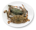 Blue crab white background Stock Photos