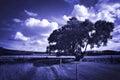 Blue dreamy landscape Royalty Free Stock Photo