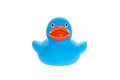 Blue duck isolated Stock Photography