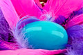 Blue egg and pink feather nest in of feathers Royalty Free Stock Photography
