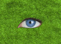 Blue eye in the middle of grass texture Royalty Free Stock Image
