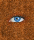 Blue eye over brown texture autumnal Royalty Free Stock Image