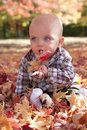 Blue eyed baby playing in autumn leaves Royalty Free Stock Photo