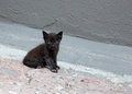 Blue Eyed Kitten Royalty Free Stock Photo